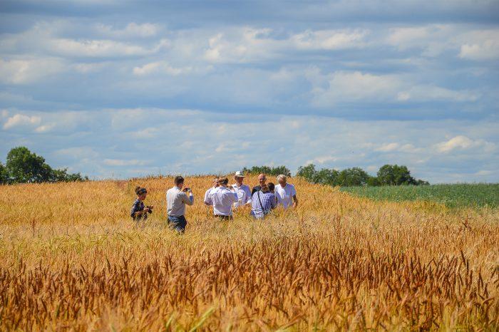 Biobauern im Getreidefeld Führung