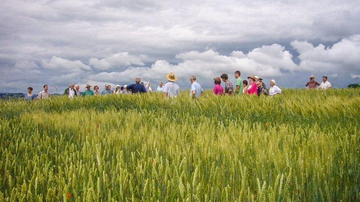 Führung im Getreidefeld